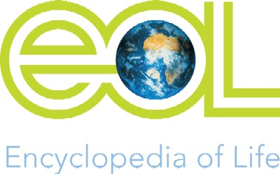 The Encyclopedia of Life includes electronic images, classification information, a description, and habitat information for species of the earth.